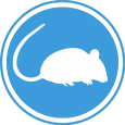 control plaga ratas