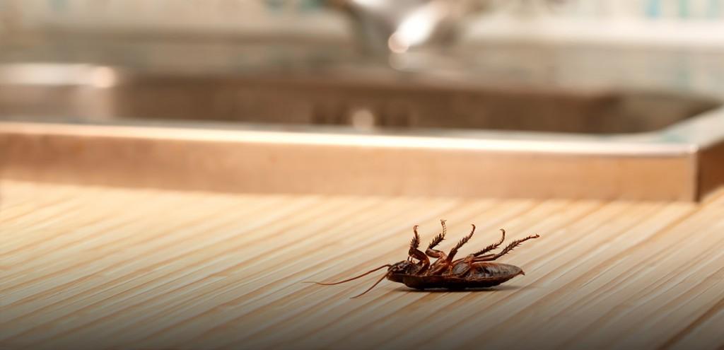 Fumigar cucarachas en Rota